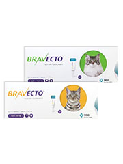 Bravecto Spot On for Cats